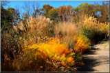 Autumn Grasses by tigger3, photography->general gallery