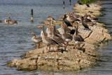 Birds road by Paul_Gerritsen, Photography->Birds gallery