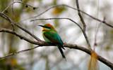 Rainbow Bee Eater by Samatar, Photography->Birds gallery