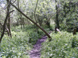 Woodland trails by Shewolfe, photography->landscape gallery