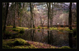 reflections in a mossy wood by JQ, Photography->Landscape gallery