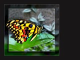 Bejewelled by LynEve, Photography->Butterflies gallery