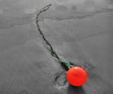 Beached Buoy by Mannie3, photography->shorelines gallery