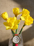 Spring Forward!!! by jerseygurl, photography->flowers gallery