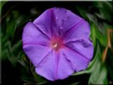 Umbrella by sadun, Photography->Flowers gallery