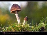 genitor by kodo34, Photography->Mushrooms gallery