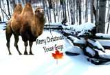 Happy Holidays by snapshooter87, photography->manipulation gallery