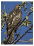 First Winter by garrettparkinson, Photography->Birds gallery