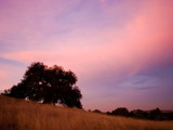 Oak Tree at Dusk by Surfcat, Photography->Landscape gallery
