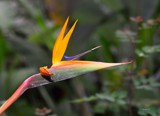 The Bird Of Paradise by tigger3, photography->flowers gallery