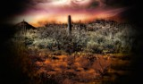 Organ Pipe Cactus by snapshooter87, photography->manipulation gallery