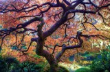 Autumnal Tree by gr8fulted, photography->nature gallery