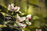 Some Blooms by Eubeen, photography->flowers gallery