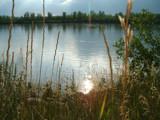 Along the Riverbank by debblor, Photography->Shorelines gallery