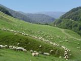 Sheep Plus by ederyunai, Photography->Landscape gallery