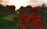 Colorful Path by HauntingMorgana, Computer->Landscape gallery