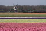 Dutch Postcard by Paul_Gerritsen, Photography->Landscape gallery