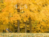 To Yellow and Beyond by jojomercury, Photography->Landscape gallery