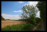 Country Lane by mia04, Photography->Landscape gallery