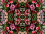 Flower Power #1 by LynEve, photography->manipulation gallery