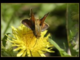 Pit Stop by photoimagery, Photography->Butterflies gallery