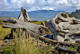 driftwood and long grass by jeenie11, Photography->Landscape gallery
