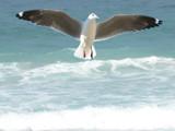 Beauty by skapie, Photography->Birds gallery