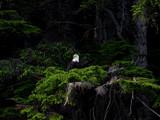 killisnoo island by jeenie11, Photography->Birds gallery