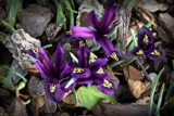 Spring Is In The Air # 4 by LynEve, photography->flowers gallery