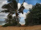 On the Beach....Northshore Oahu by Anita54, Photography->Landscape gallery