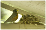 Here They Are by cynlee, photography->birds gallery