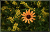 Ottawa Foofies by Jimbobedsel, Photography->Flowers gallery