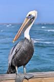Oscar by SR21, Photography->Birds gallery