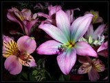 Autumn Lilies by LynEve, Photography->Flowers gallery