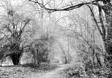 November impressions V by ekowalska, photography->landscape gallery