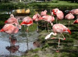 Pretty in Pink Flamingos by fogz, Photography->Birds gallery