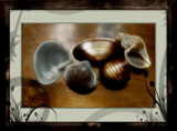 Shell Game by mesmerized, photography->manipulation gallery