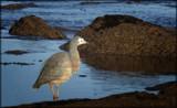 Bird by LynEve, photography->birds gallery