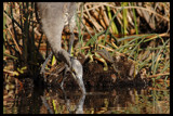 Odd Couple by garrettparkinson, photography->birds gallery