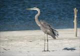 Island Birds IX by allisontaylor, Photography->Birds gallery