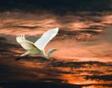 Heron in Sunset by kramden11, Photography->Manipulation gallery