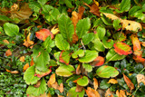 Colorful Ground Cover by tigger3, photography->nature gallery
