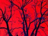 Hellish Tree by Paul_Vineyard, Photography->Manipulation gallery
