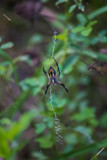 Spidie has a Sidekick by Pistos, photography->insects/spiders gallery