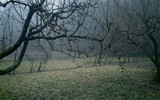 the notable afflicted by soya, Photography->Landscape gallery