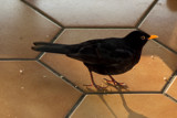 Don't Dirty The Tiles ! by Ramad, photography->birds gallery