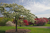 Birdsong and Apple Blossoms by Silvanus, Photography->Landscape gallery