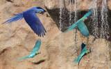 Parrots by Paul_Gerritsen, photography->birds gallery