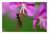 evening flowers and flying thang by JQ, photography->macro gallery