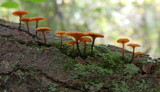 Wild Mushrooms by Tomeast, photography->mushrooms gallery